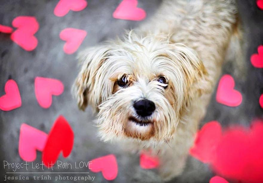 fotografias de perros abandonados