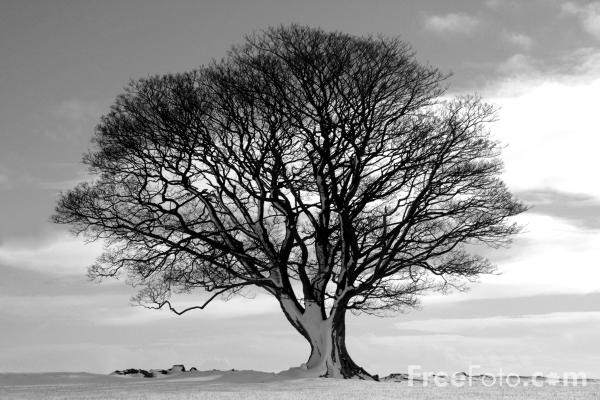 Black And White Tree Picture