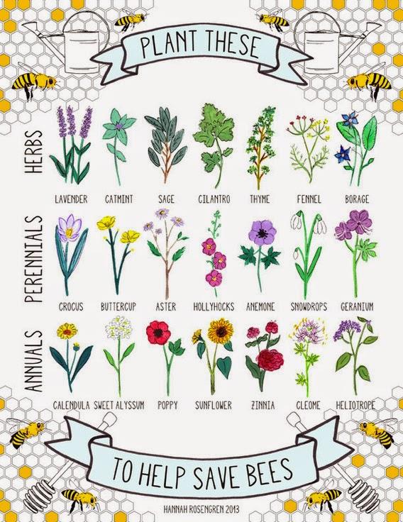 http://www.hannahrosengren.com/help-save-bees.html