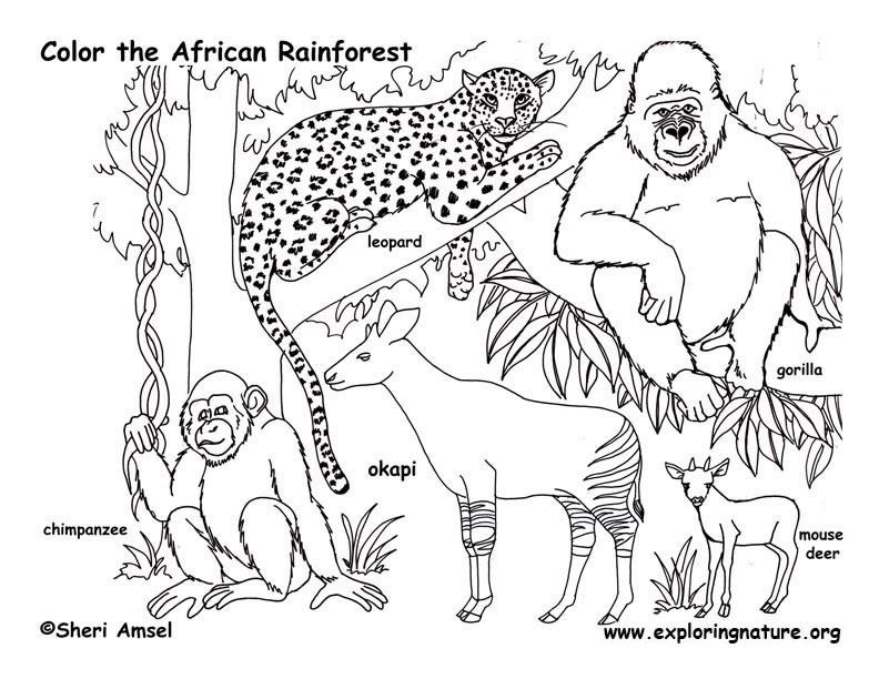 Coloriages a imprimer coloriage animaux de la jungle - Coloriage animaux jungle ...