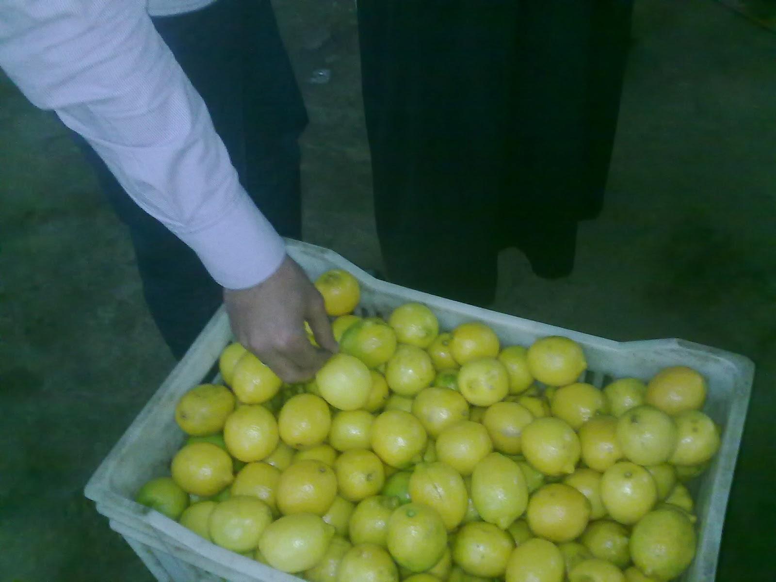 egyptian_lemon