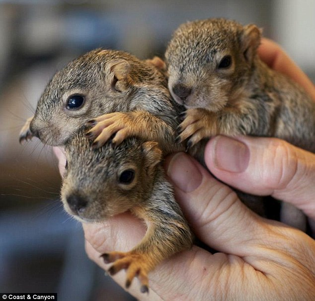 101 Squirrels! | A circle of life