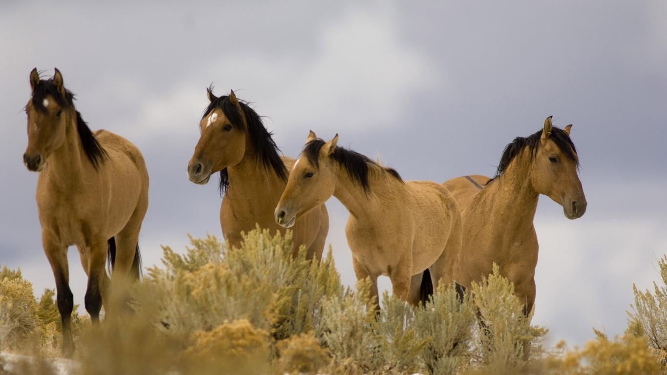 Beautiful Wild Horses Wallpaper Wild Horses Wallpapers