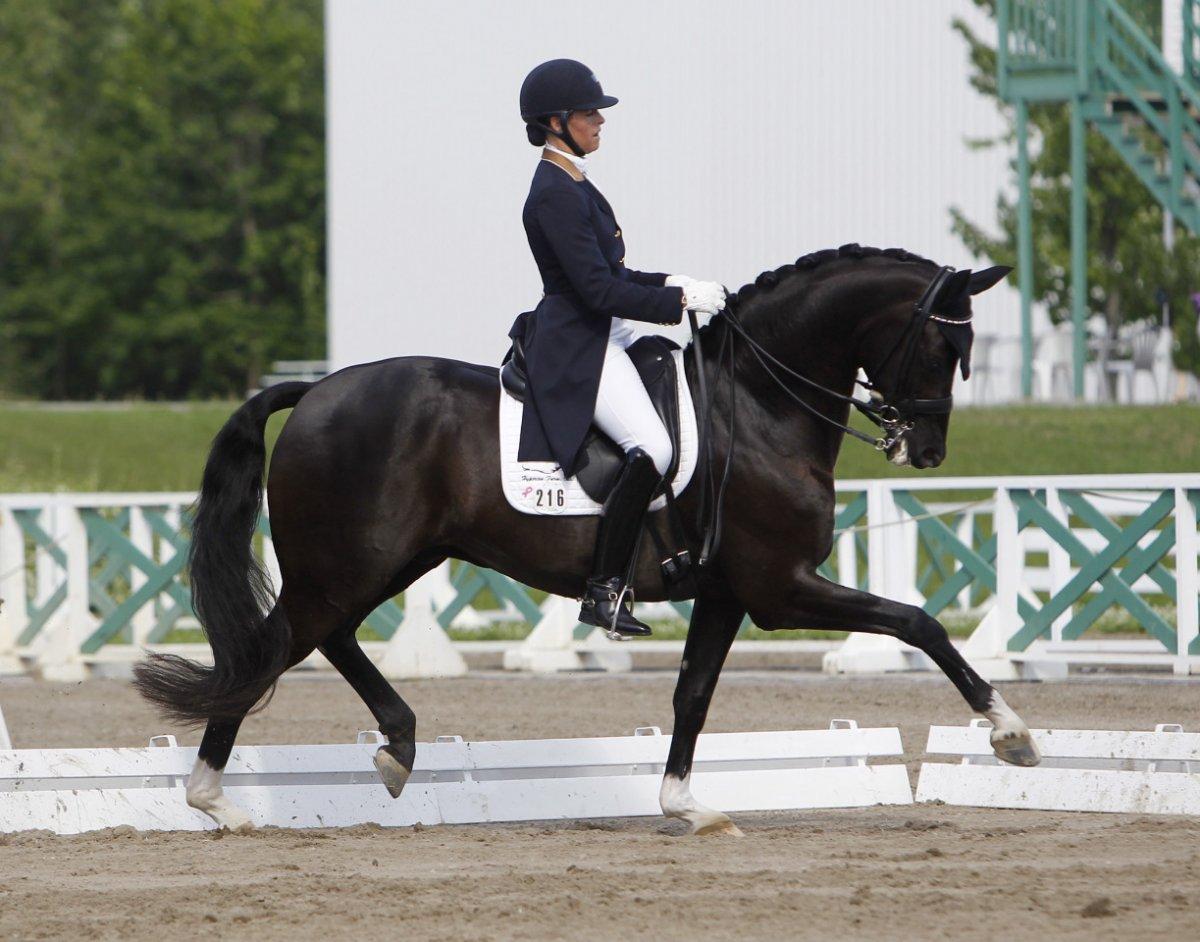 Equestrian dressage tickets