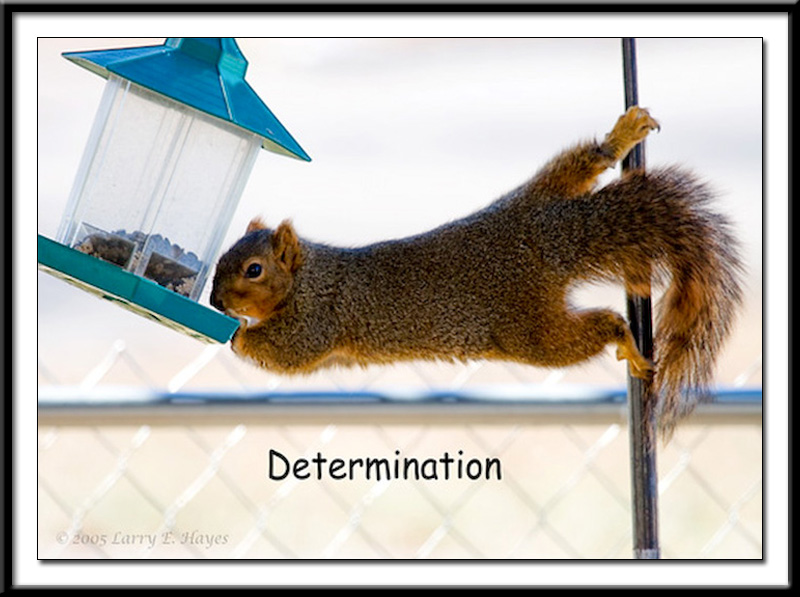 Balance and DeterminationDetermination Face