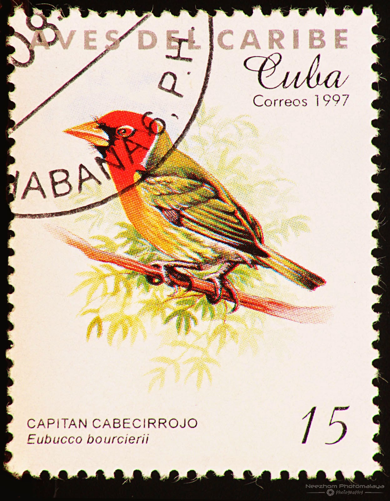 Cuba 1997 Birds of the Caribbean stamp - Red-headed Barbet (Eubucco bourcierii) 15 c