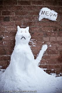 Gatos de nieve