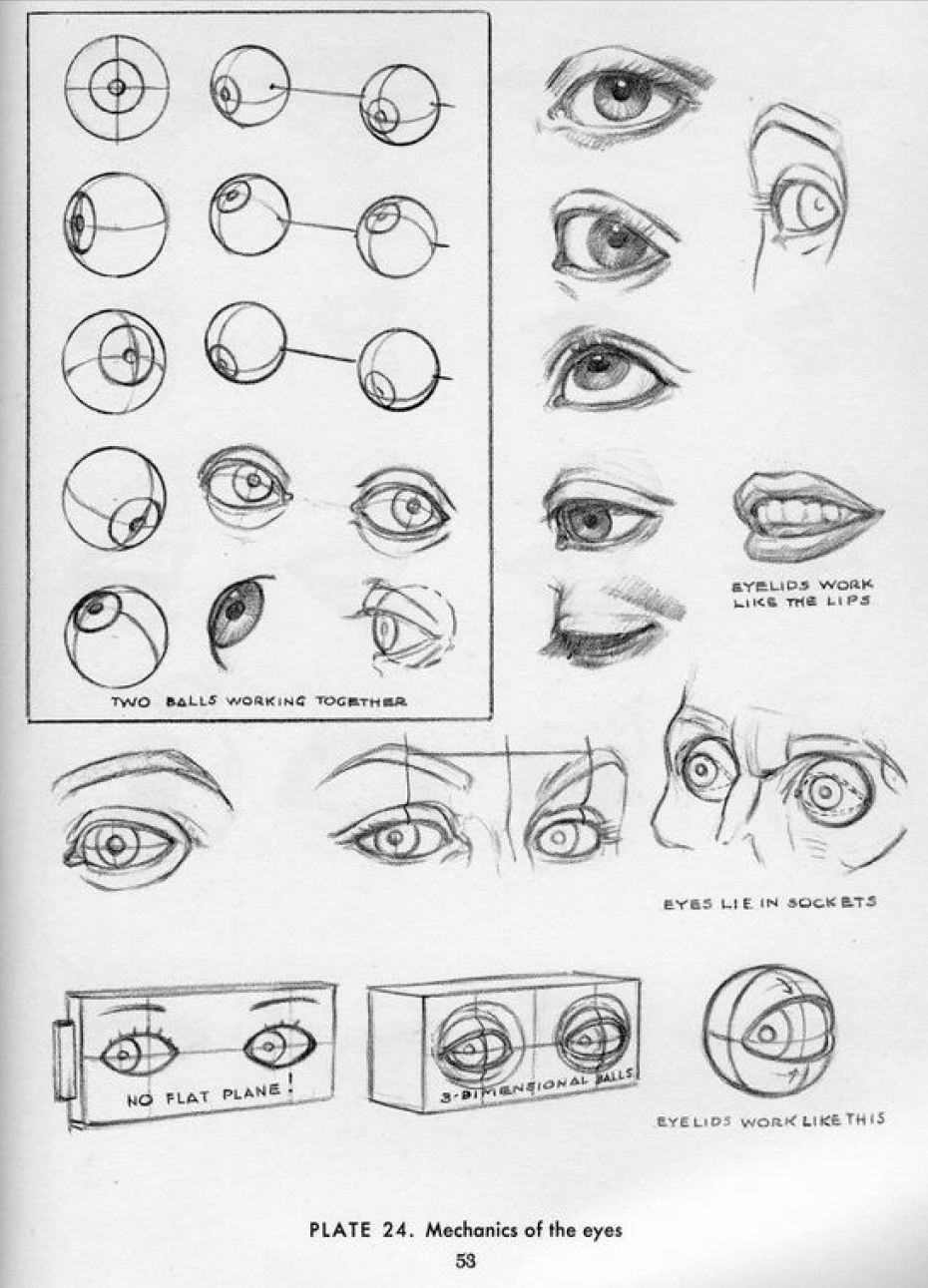 We talked a bit about the structure of the eye as in this except from ...