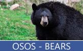 Imágenes y fotografías de osos salvajes y polares - Bears