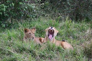 ملف كامل عن اجمل واروع الصور للحيوانات  المفترسة   حيوانات الغابة  1127324391_be10d4980c