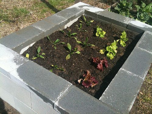 Raised Bed Garden Ideas Concrete Block Raised Bed Gardens