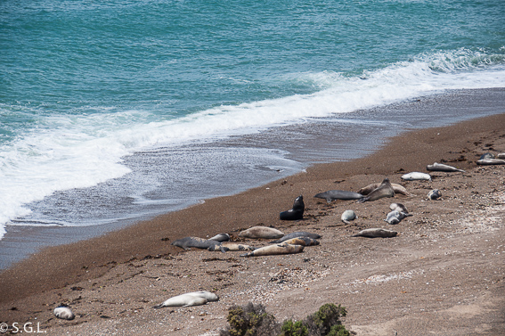 Puerto Madryn. Argentina