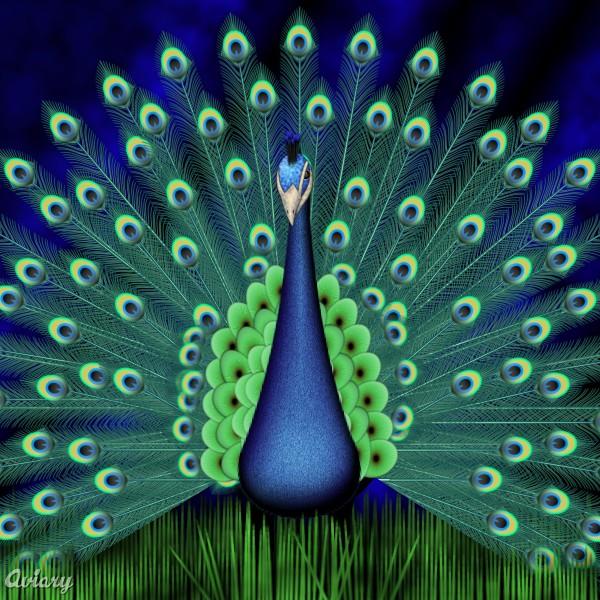 Schokopozzz el sida - Fotos de un pavo real ...