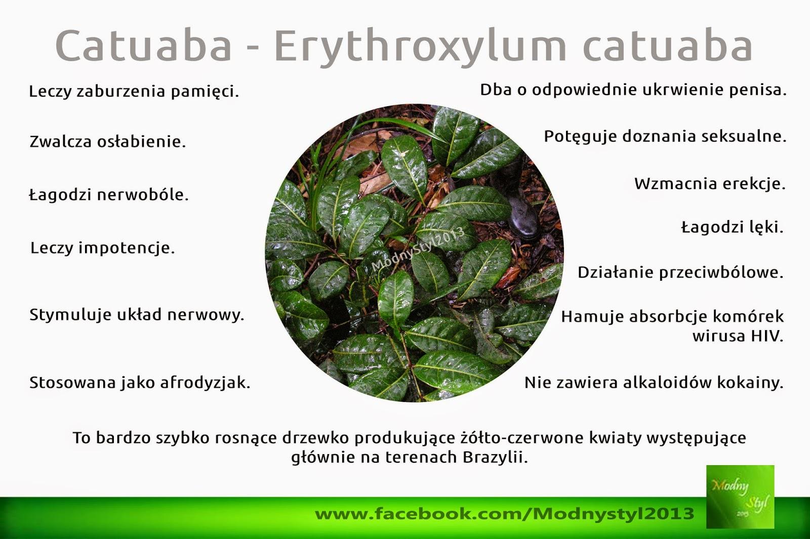 Catuaba - Erythroxylum catuaba