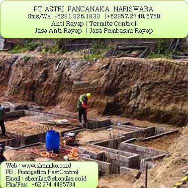 Jasa Pembasmi Rayap di Surabaya