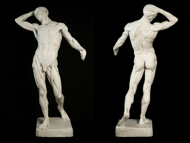 ANATOMY of MAN by Edouard Lanteri | FELICECALCHI
