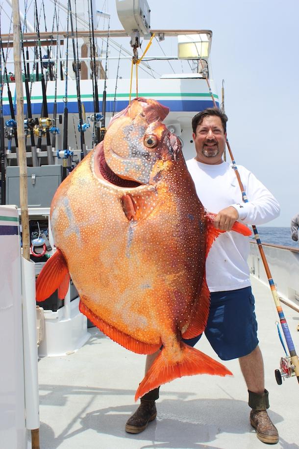 Image gallery hawaiian opah fish for Hawaiian moon fish