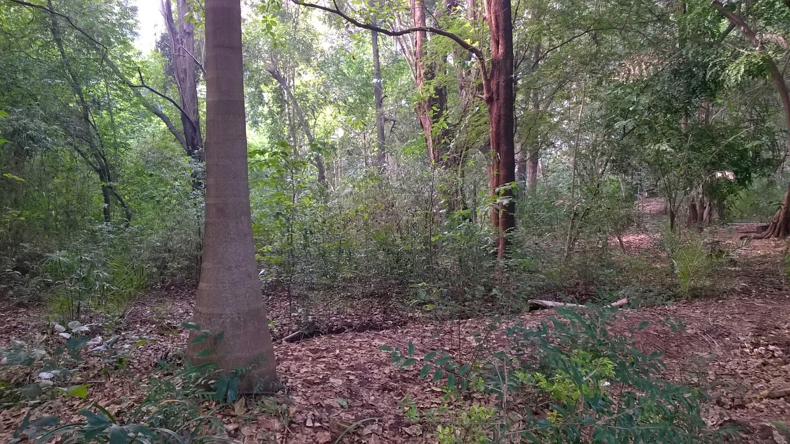 Alice garden, University, forest