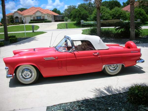 1956 Ford Thunderbird Convertible Auto Restorationice