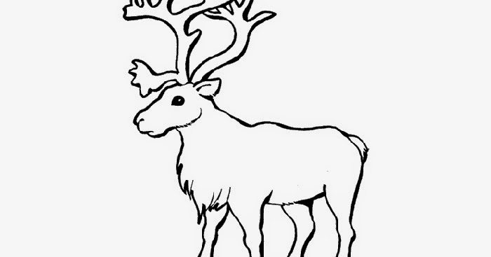 Reindeer coloring page   Free Coloring Pages and Coloring Books for ...
