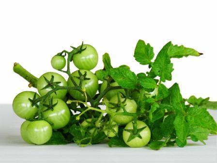 Resep Udang Masak Tomat Muda