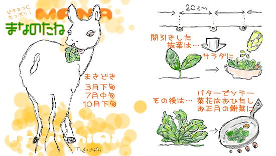 長久手野菜「真菜」