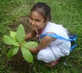 Planting and gifing trees on birthdays, anniversaries and special occasions.