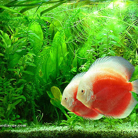 Wallpaper Ikan @ Digaleri.com