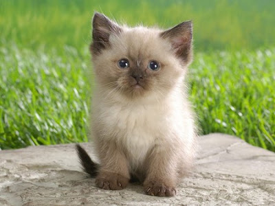 Beautiful Cats and Kittens Pictures and Wallpapers