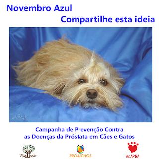 Cartaz de campanha de prevenção contra doenças da próstata em cães e gatos