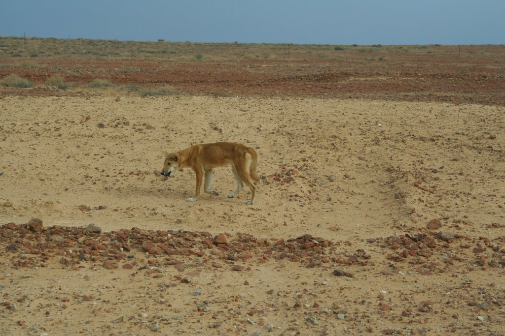Little Desert National Park Dogs