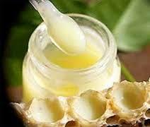 Sữa ong chúa tươi nguyên chất trực tiếp tại cơ sở nuôi ong