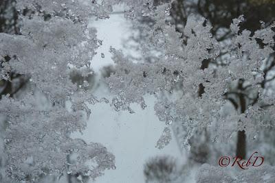 Snöstjärna på fönsterruta. foto: Reb Dutius