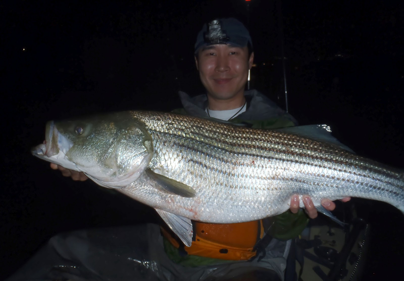 Angling addict rva stripers for Striper fish pictures