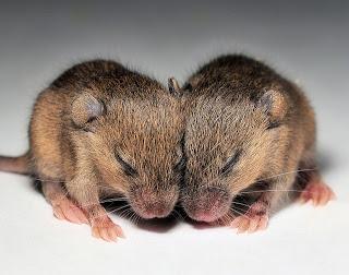 baby-mice-bomb