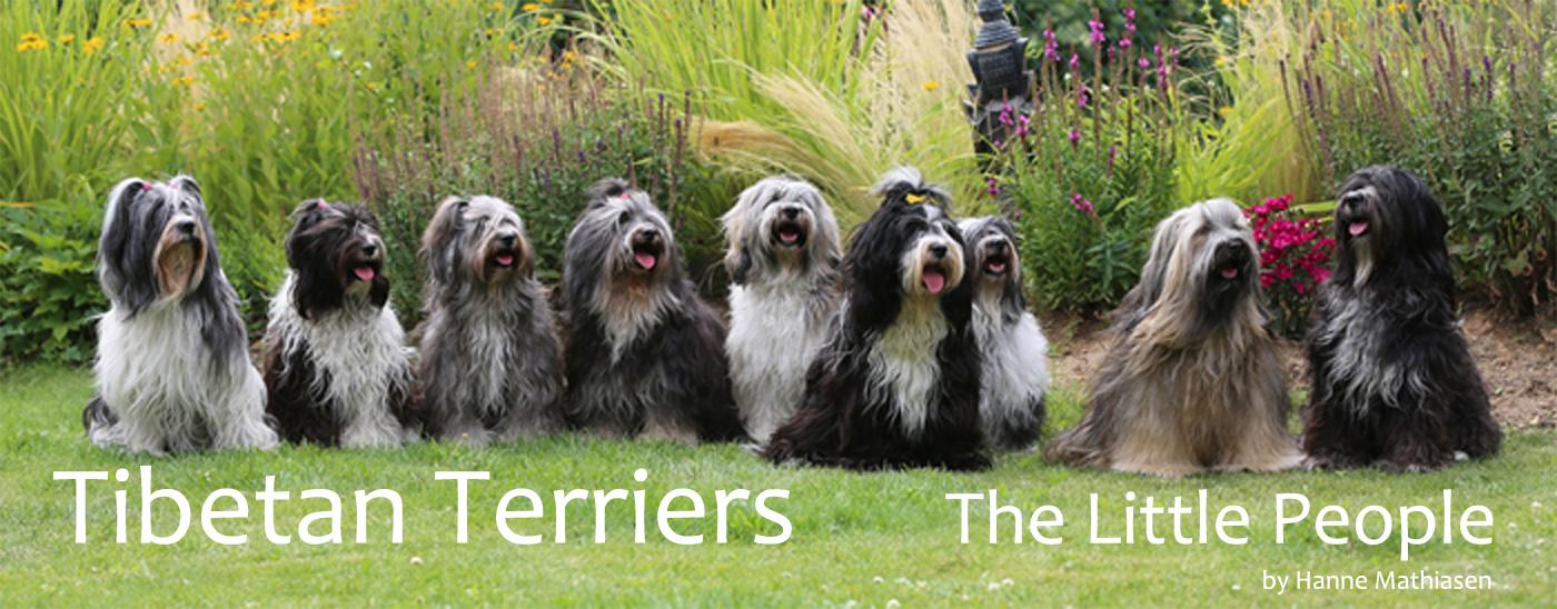 Tibetan Terriers - The Little People