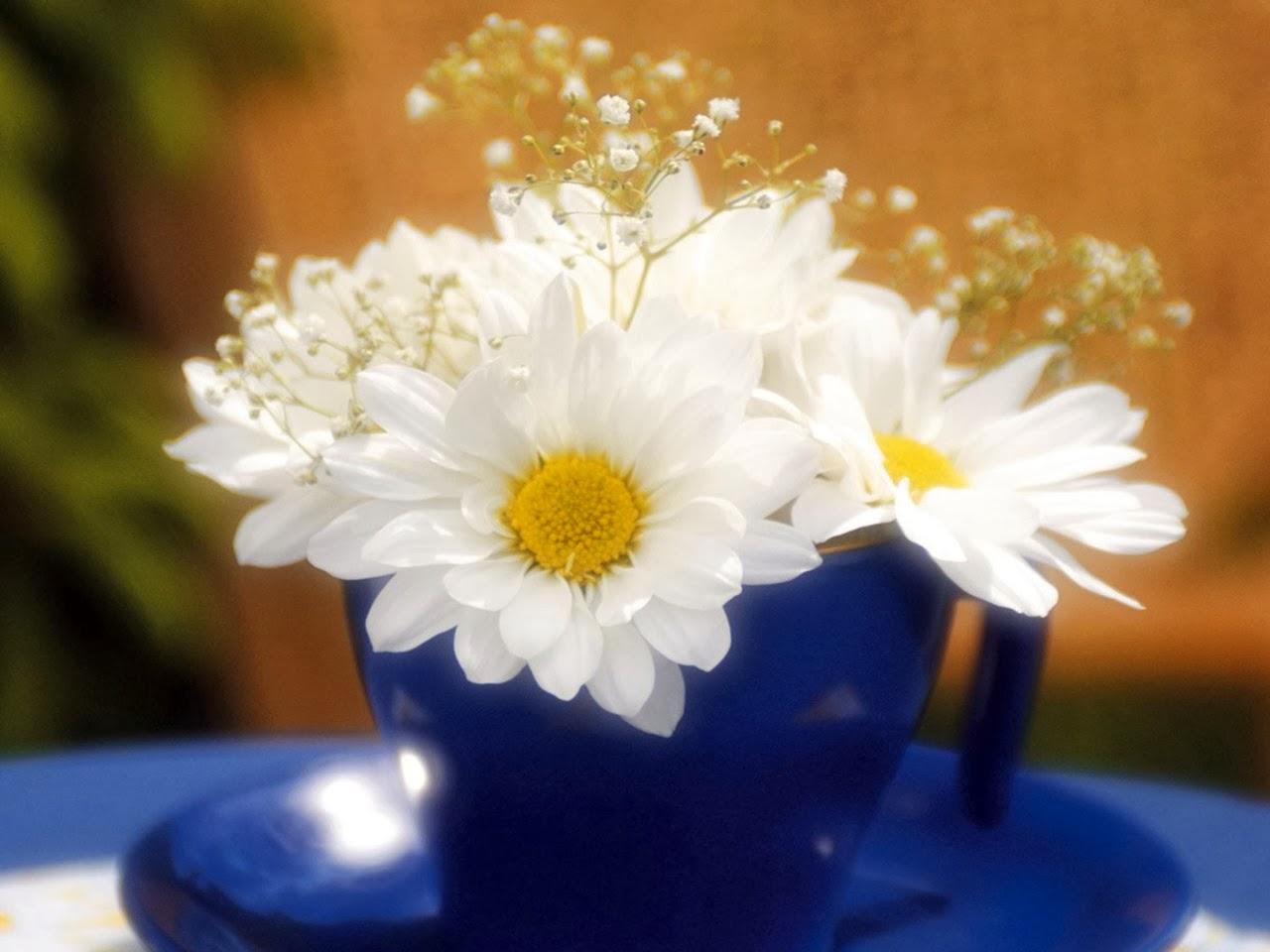 Цветок в душе фото