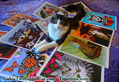 Tigerpixie.com Fantasy Cat Art & Anakin The Two Legged Cat