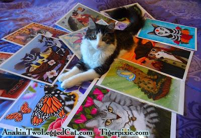 Tigerpixie.com Fantasy Cat Art & Anakin The Two Legged Cat