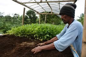 Pengertian Pertanian Organik Pertanian Organik Dan Pertanian Modern
