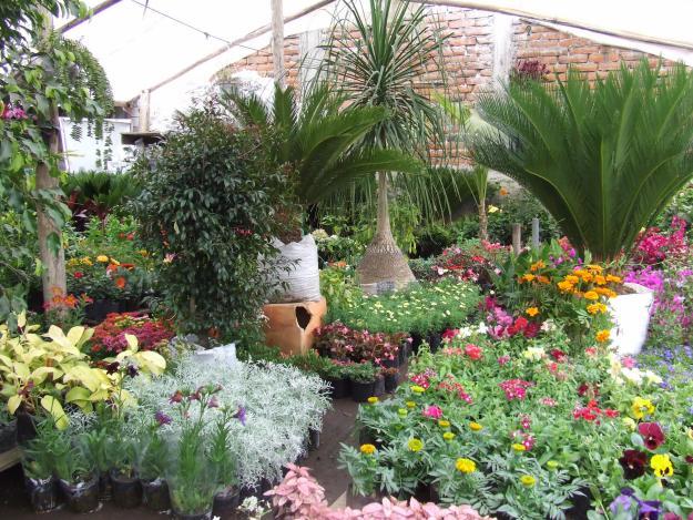 Manejo de jardines for Jardines decorados con plantas