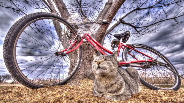 It's My Bike!