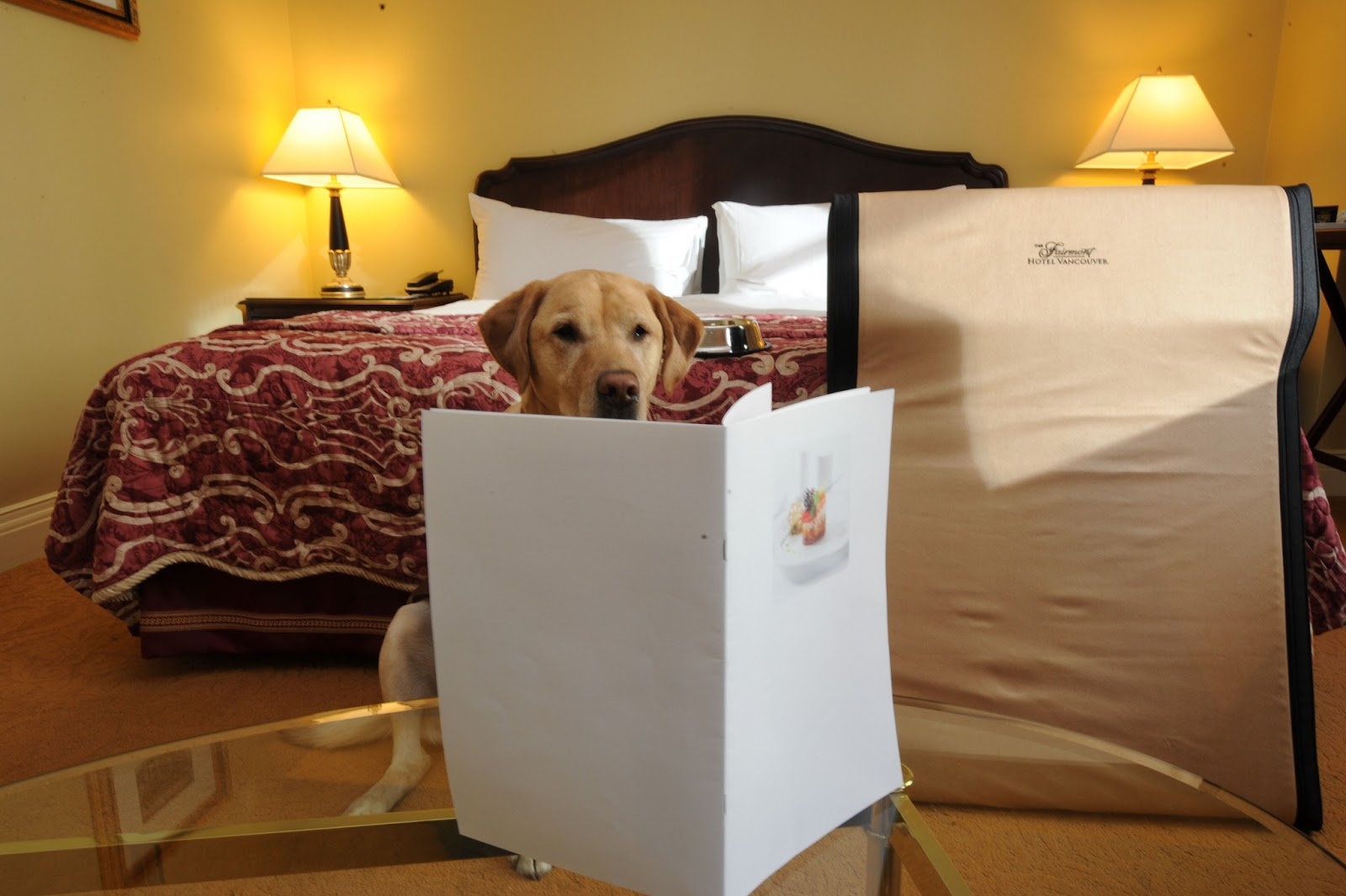 Luxury hotels best pet friendly hotels for Pet friendly luxury hotels