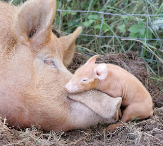 20 Casos De Niños que Fueron Criados por Animales
