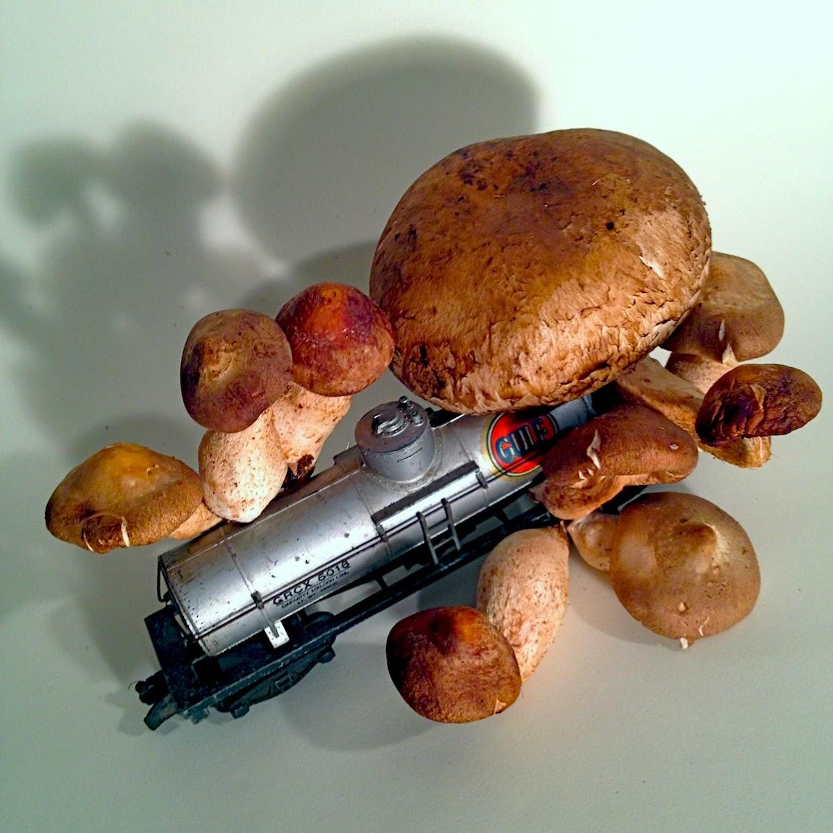 Nomadic Fungus