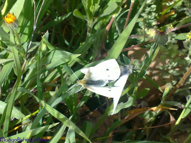 mariposas en el campo