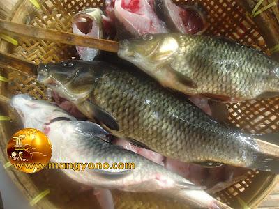 Ikan mas sudah dibersihkan dan dikeluarkan bagian isi perutnya