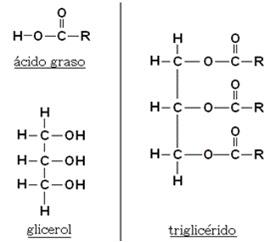 esterois e esteroides