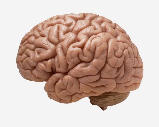 How do these Brain parts relate to Computer parts?