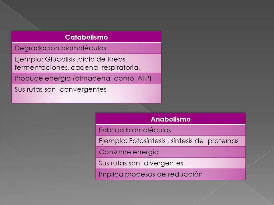 reaccion anabolica y catabolica